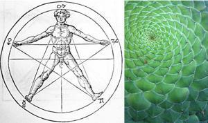 fibonacci logo design